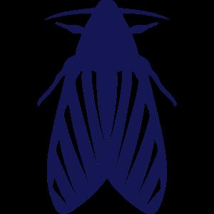 nacht schmetterling insekt 11123