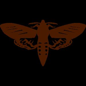 nacht schmetterling insekt 1112