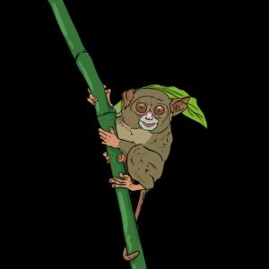 Koboldmaki am Bambus Geschenkidee für Affen Fans