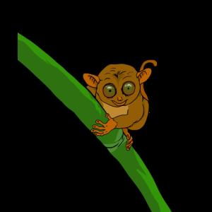Kobold Maki mit großen Augen hält sich an Bambus