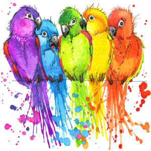 Papagei Vögel Parrot