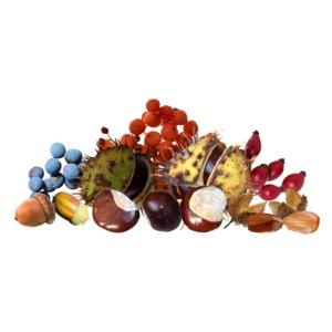 Herbst Früchte Beeren Kastanie