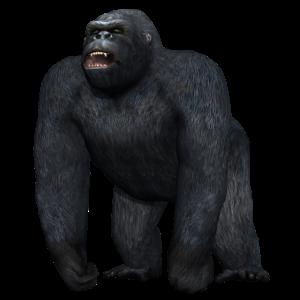 Gorilla in drohender Haltung
