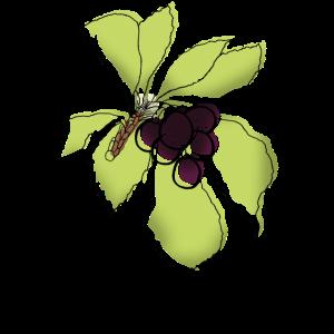 Beeren Pflanzendesign
