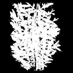Blätter im Herbst. Essigbaum