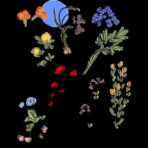 flowers blumen filigran bunt plants pflanzen vegan