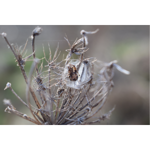 Spinnen Hoodie