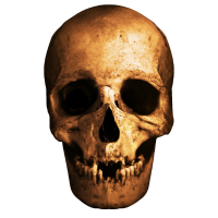 Mensch Cranium