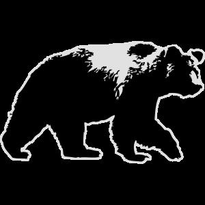 Grizzly Bear- Bär