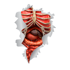 Innere Organe Anatomie gruseliges Halloween Shirt