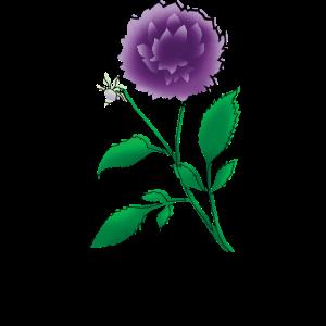 Dahlie Blume zeichnen