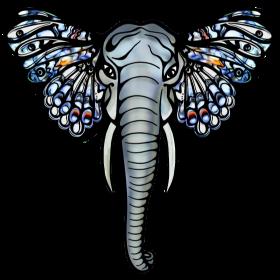 Elefant mit Schmetterling Ohren, Afrika, Safari