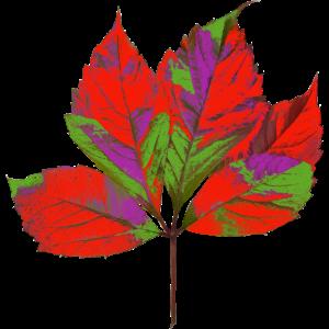 Künstlerisch verfremdetes Herbstblatt