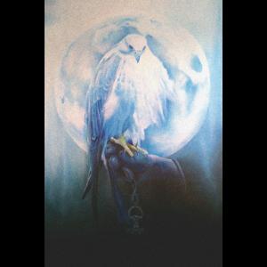 Wie ein Falke durch die Nacht