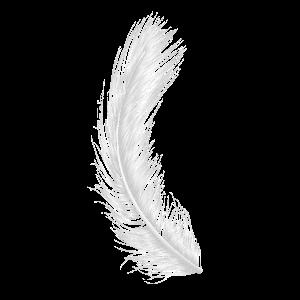 Weiße Feder Federn Engel Engelsymbole Esoterik