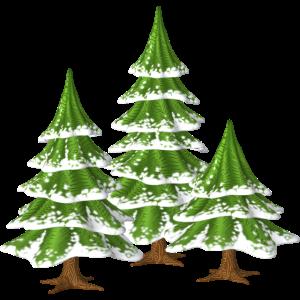Weihnachtsbäume Tannen
