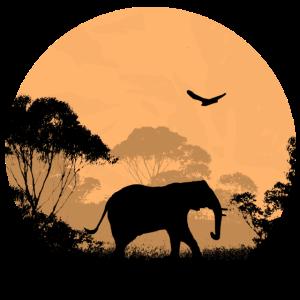 Elephant - Elefant