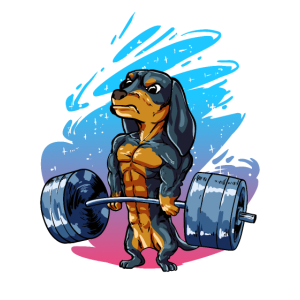 Dachshund Dakel Bodybuilder