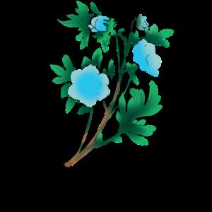 Zeichnung des blauen Nemophila
