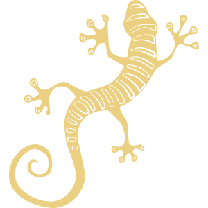Coole Salamandereidechse oder Gecko