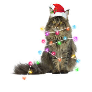 Katze - Weihnachten - Winter - Lichterkette