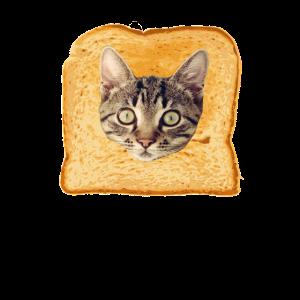 Toast Katze