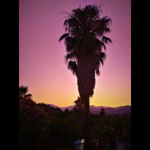 Palme Sonnenuntergang - RA