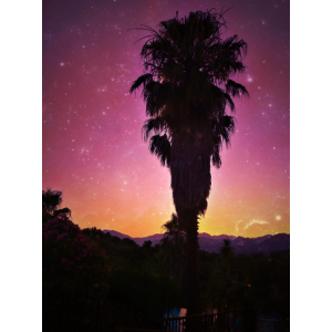 Galaxy Palm - RA