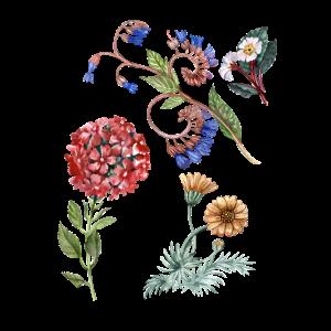 Blumenmotive, Botanik, Blumen, Flora, Aquarell