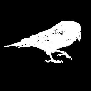 Krähe - Rabe
