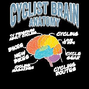 Radfahren Gehirn Anatomie
