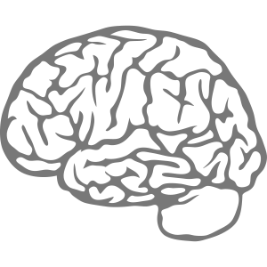 Gehirn Gehirn 23030