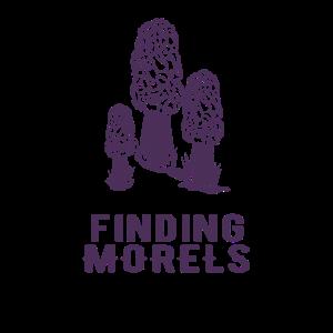 Finden von Morchel-Pilz-Lebensmittel überall Wald