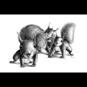 Drei neugierige Eichhoernchen