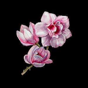 Magnolie, Blume, Blumen, Botanik, Garten