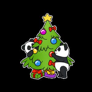Panda Weihnachten Advent Christbaum Heilig Abend