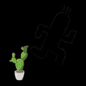 Kaktus-Traum