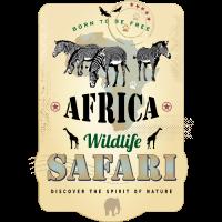 Zebras Africa Wildlife Safari Afrika Abenteuer