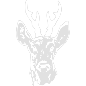 Rehbock - Hirsch - Deer