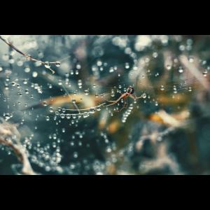 Spinne in ihrem regennassen Netz