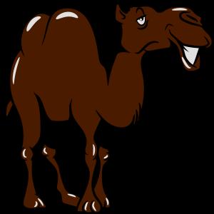 Kamel doof lieb