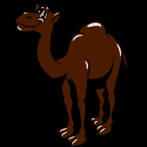 Kamel lustig