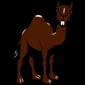 Kamel lustig doof