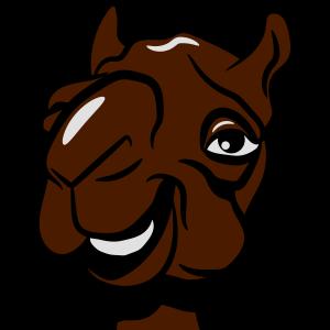 Kamel witzig lachen