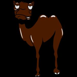Kamel witzig müde