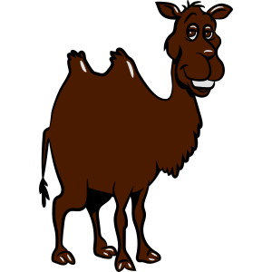 Kamel witzig tier