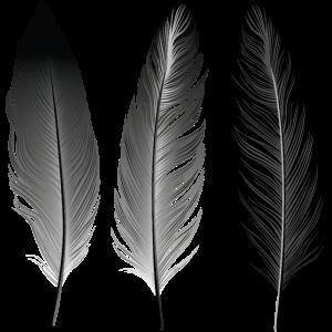 Boho | Feather Style | Illustration