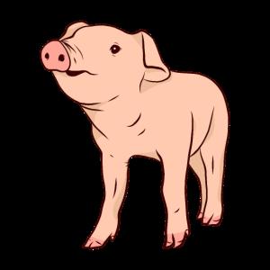 Schwein Schweine Sau Schweinchen