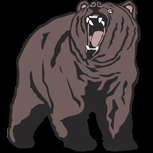Grizzly - Bear - Bär