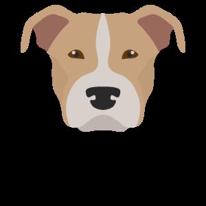 American Pit Bull Terrier Hundekopf